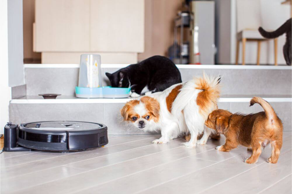 Are Robot Vacuums Good for Dog Hair?